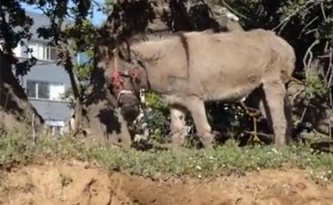 Animalistas denuncian a un chatarrero por maltratar a su burro