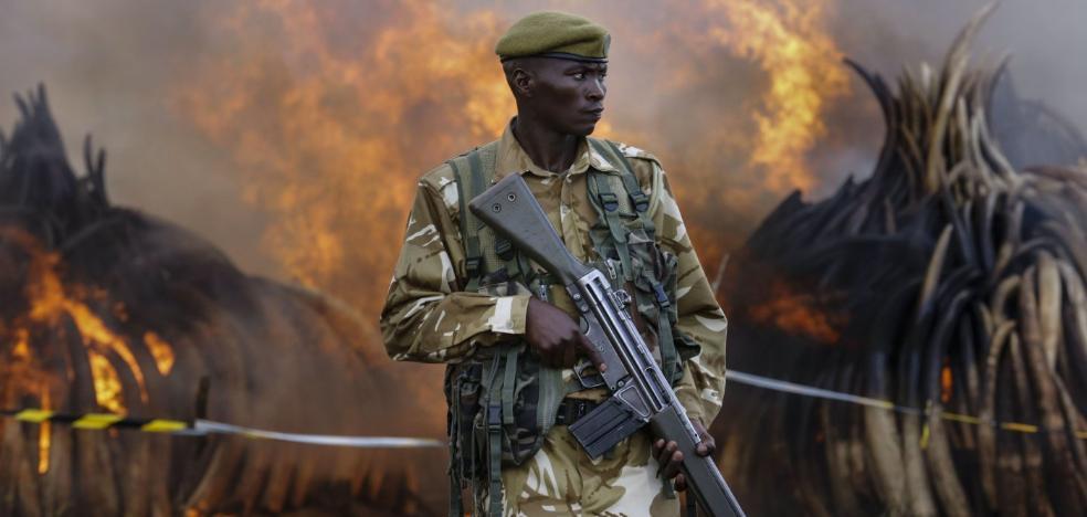 Conmoción en África: asesinan al salvador incansable de los rinocerontes y elefantes