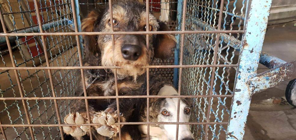 Abyda amenaza con una manifestación si no se mejora la perrera municipal de Jaén