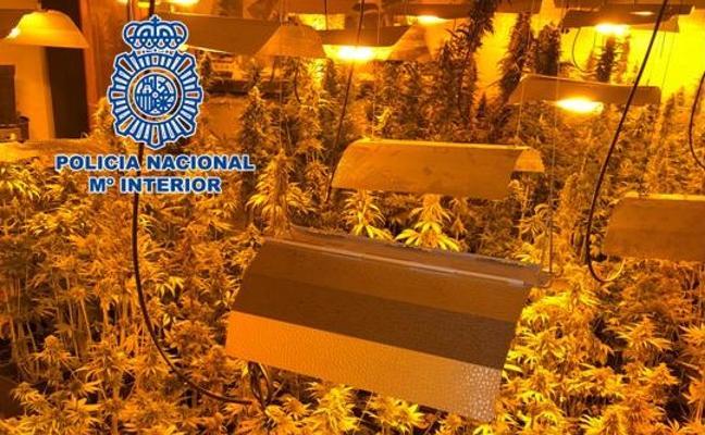 Desarticulada una plantación de marihuana en Salobreña y detenido el dueño