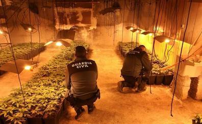 Ocho detenidos con 2.532 plantas de marihuana en Granada