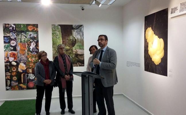 Alegato en defensa del agua en la muestra de la artista Bárbara Noculak
