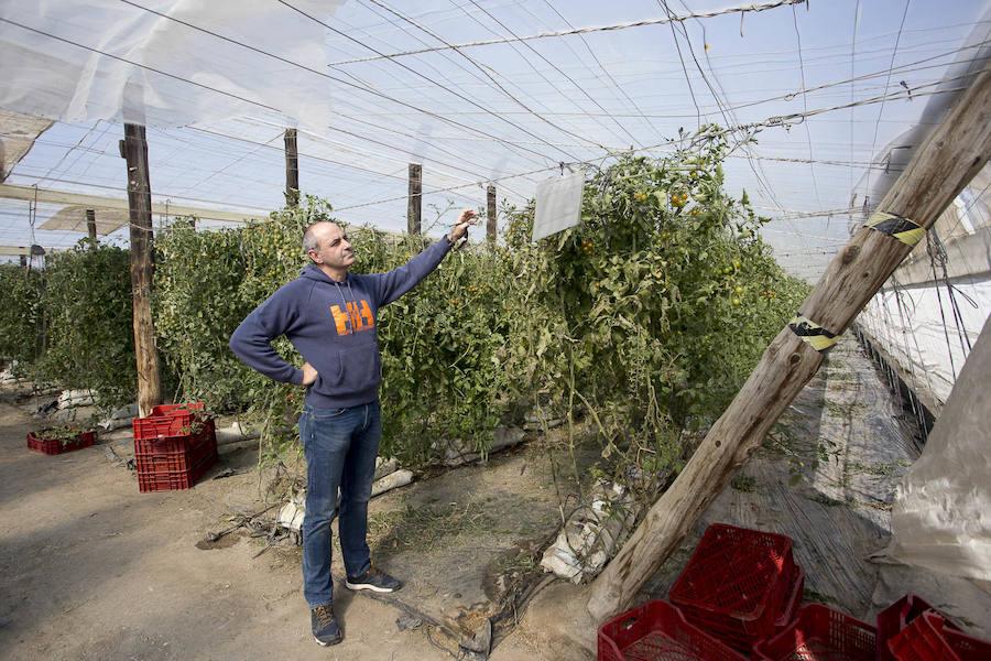 Las ayudas de la Junta a 400 hectáreas de invernaderos peligran por su situación alegal