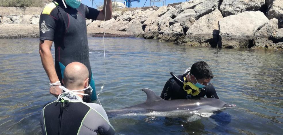 Aparecen cinco delfines listados con las mandíbulas fracturadas en la provincia