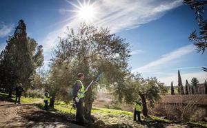 Los olivos de Boabdil