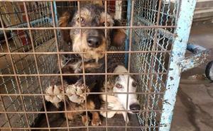 El Ayuntamiento de Jaén acometerá mejoras en la perrera