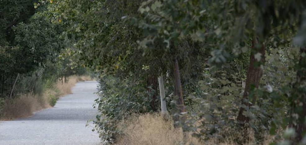 Policía Local busca durante horas a dos jabalíes que aparecieron en la Fuente de la Bicha y se dirigían a Granada