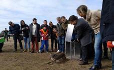 Sueltan dos linces en Vilches para repoblar la comarca de Guarrizas