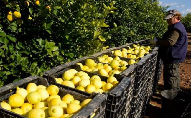 Febrero trae una mejora de los precios en origen de los cítricos
