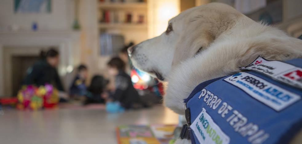 Perros terapeutas