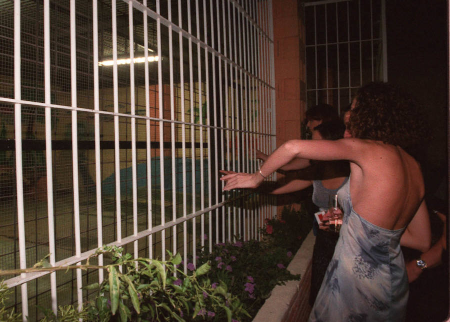 Tigres en una discoteca de Granada