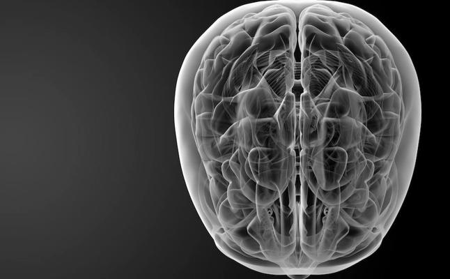 Científicos descifran el código para restaurar la creación de recuerdos en cerebros envejecidos o dañados