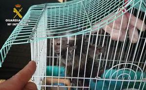 Investigan a once personas por venta ilegal de primates sin control sanitario