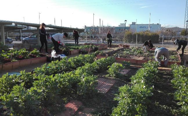 Voluntarios ambientales y solidarios