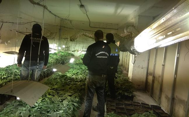 Descubren más de 1.700 plantas de marihuana en Santa Fe y Loja