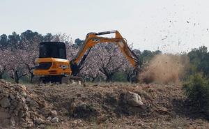 Nuevo foco de xylella fastidiosa a 300 kilómetros de Jaén