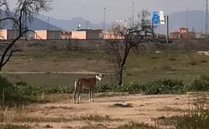 ¡Ayuda! Este galgo está perdido en Granada