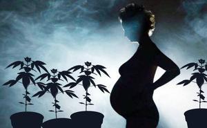 Una menor, detenida por cultivar cannabis cuando estaba a punto de parir, acepta una condena de 13 meses de encierro