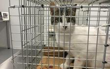 Abyda castra a los gatos de una colonia de Jaén gracias a un donativo