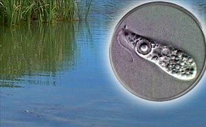 Alerta tras el primer caso de un niño fallecido por la ameba 'come cerebros'