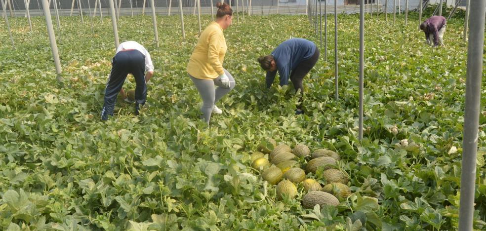 Agricultura estima un descenso de la superficie de melón del 8% y un aumento del 3% de sandía