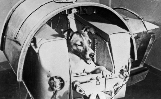China envió al espacio a un perro con miedo a las alturas