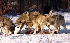 Extinciones pasadas provocadas por la acción humana pueden predecir la futura distribución de las especies