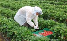 600 jornaleros jienenses se apuntan a la bolsa de UPA para trabajar en la recogida de la fresa