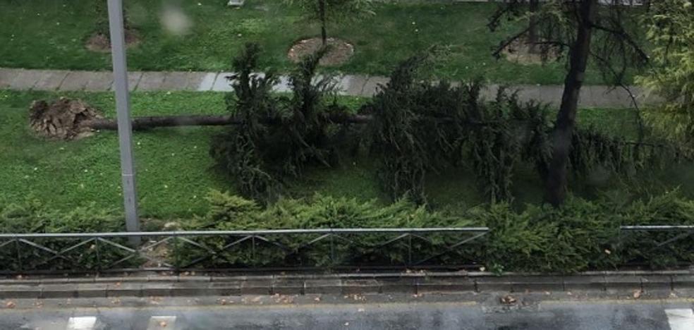 Una turista herida y ocho coches dañados por la caída de árboles y ramas