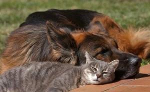 Parásitos internos: cómo afecta el echinococcus a perros y gatos