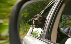 Cómo llevar a tu perro en coche de forma segura