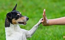 Los perros, expertos en lenguaje corporal