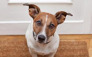 ¿Cómo recibe tu perro a las visitas?