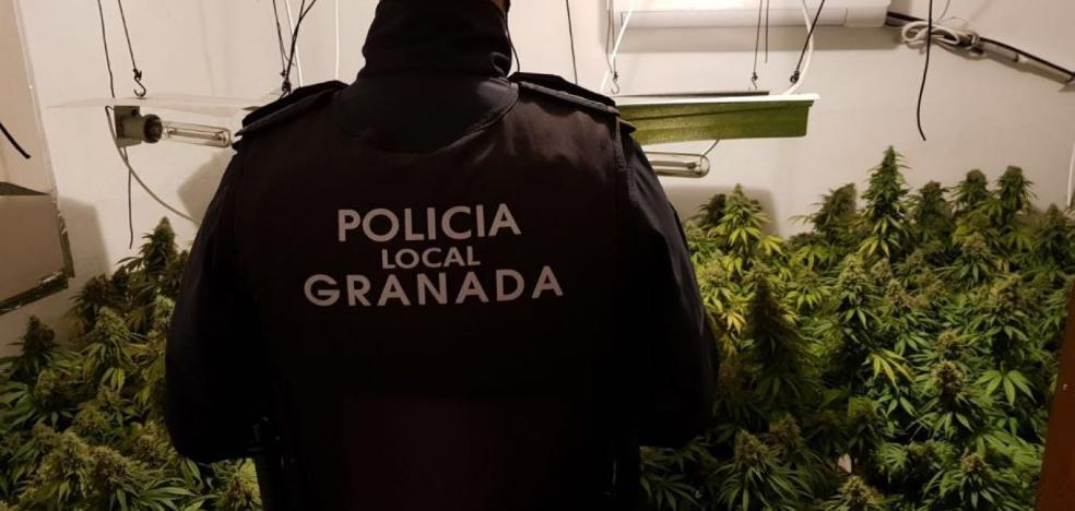 Buscan a un vecino de Bilbao por cultivar 'maría' en Granada