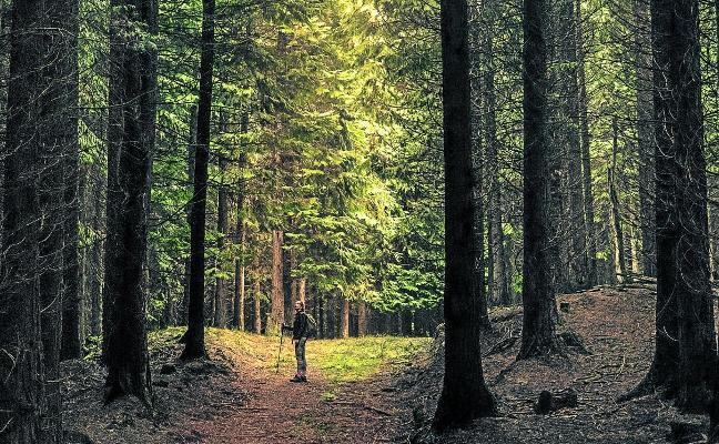 ¿Cuántos árboles hay en España? La sorprendente tendencia natural que muchos no comprenden