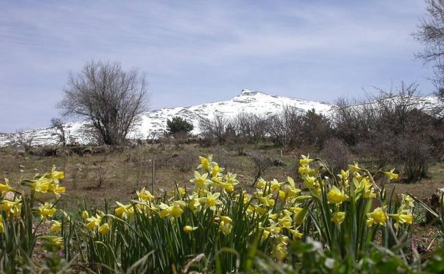 5 jardines de lujo en la provincia de Granada para visitar en primavera