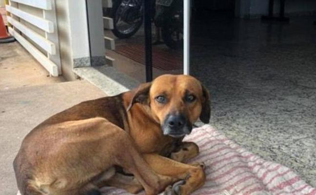 La desgarradora historia del perro que lleva 4 meses esperando en la puerta del hospital a su dueño muerto
