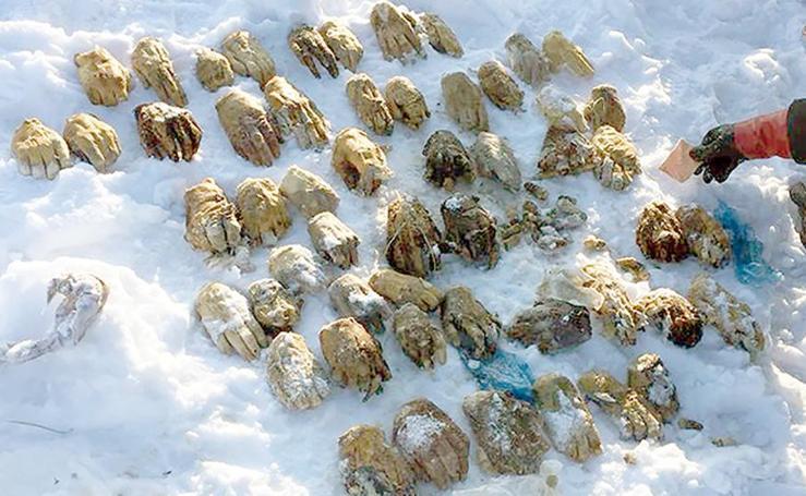 Encuentran unas misteriosas bolsas con 26 pares de manos