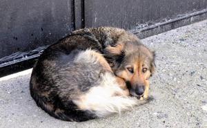 Una familia adopta a la perra que estuvo 10 días en la puerta de un cementerio del Valle de Lecrín