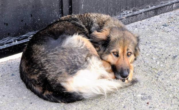 La perra no se separaba de la puerta del cementerio./Rafael Vílchez