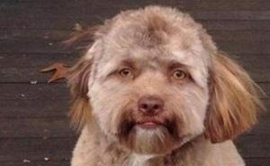 El rarísimo perro con cara de hombre que ya es famoso en Facebook