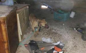 Su fueron de vacaciones dejando a sus 4 perros solos durante 12 días: ahora los condenan a cárcel