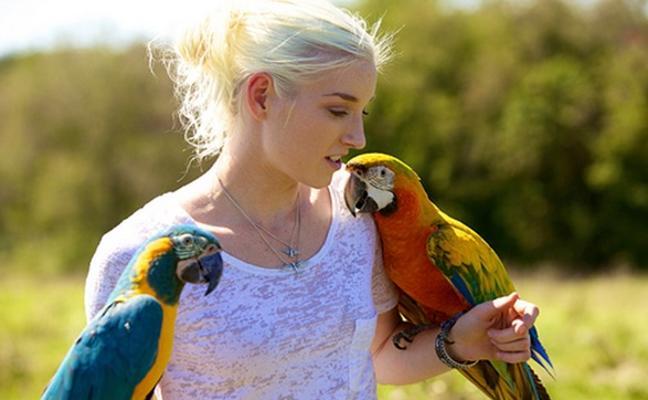 Hallan una conexión entre pájaros y humanos desconocida hasta el momento