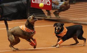 Los dueños de perros tendrán que gastarse 35 euros en la prueba de ADN de sus mascotas
