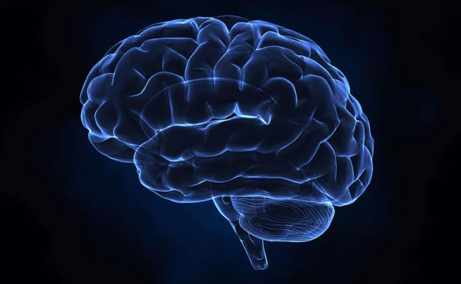 Una startup estadounidense ofrece crear una copia digital del cerebro