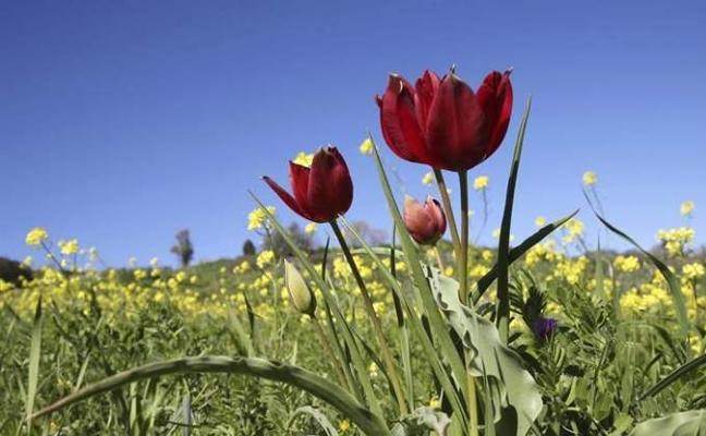 ¿Cómo va a ser la primavera en España? Descubre los secretos que traen abril y mayo