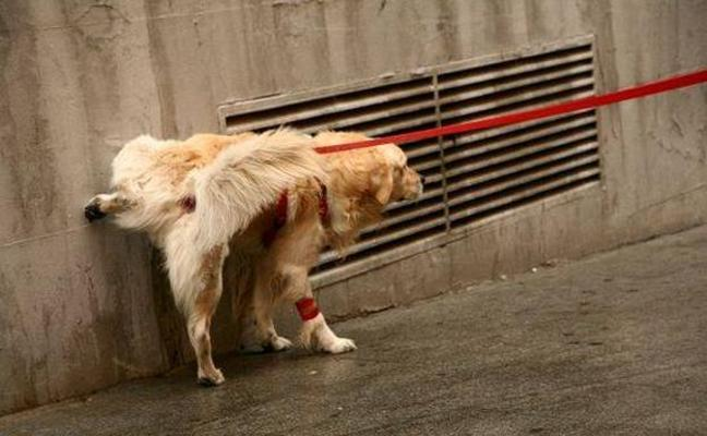 La Policía recuerda: el azufre para evitar que los perros orinen es inútil, tóxico e ilegal