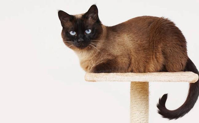 5 consejos para hacer más placentera la vida de tu gato