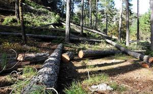 Decálogo sostenible para comprar y usar madera