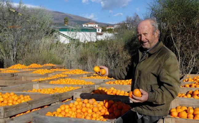 El Valle se prepara para celebrar este fin de semana la XVIII Feria de la Naranja